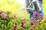Comment économiser l'eau en jardinant?