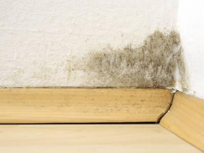 moisissure humidite mur